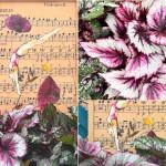 """con un tuffo """"Allegro"""" tra la musica e i colori vellutati e metallici, che sfumano dal verde al grigio polvere, dal mogano a tutte le tonalità del rosso e del rosa brillante di questa varietà di begonia"""