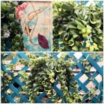 'nuotando nell'aria' tra le onde capricciose di questa pianta tropicale. Esemplare di Aeschinanto radicans rasta dai fiori rosso vermiglio.